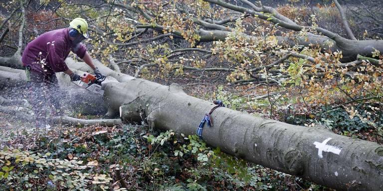 Staatsbosbeheer stopt voorlopig met particuliere bomenkap na ongeluk.