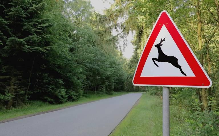 Verzekeraars: aantal aanrijdingen met dieren fors gestegen.